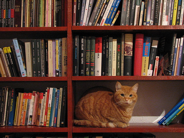 il-cats-and-books-5.jpg